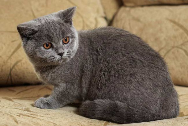 Как правильно брать мочу у кота для анализа?
